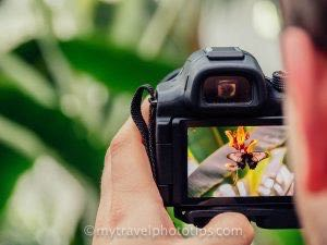 the best dslr camera for travel photography